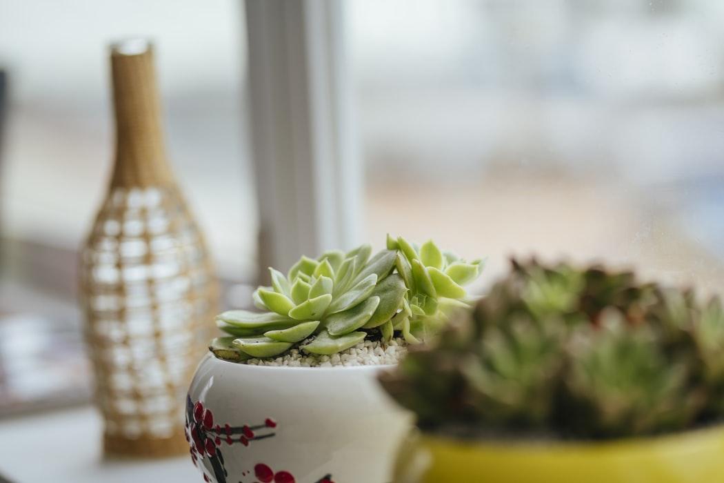 rośliny do małego wnętrza